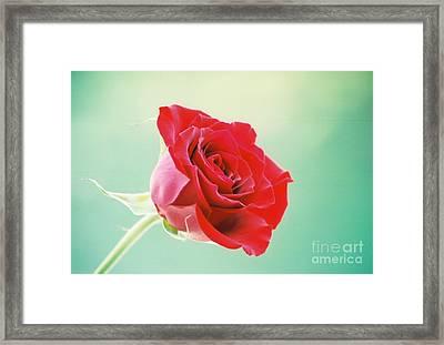 Eternal Rose Framed Print by Clint Day