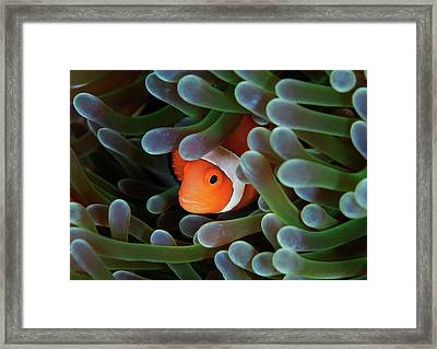 Eternal Theme Framed Print by Nature, underwater and art photos. www.Narchuk.com