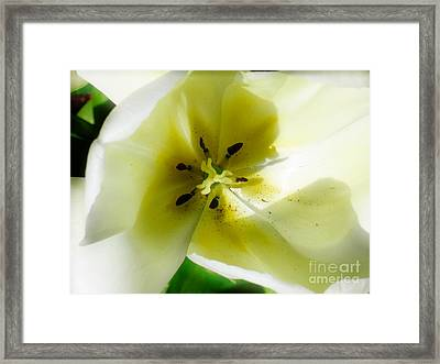 Ethereal Framed Print by Rory Sagner