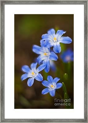 Etoiles Bleus Framed Print by Mike Reid