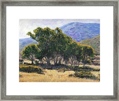 Eucalyptus Grove Catalina  Framed Print by Randy Sprout