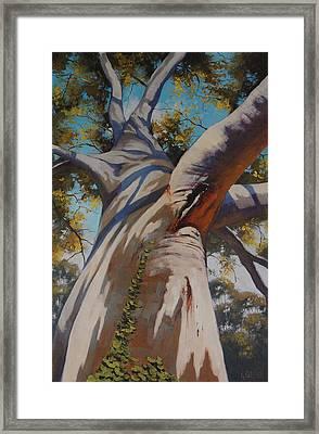 Eucalyptus Portrait Framed Print by Graham Gercken