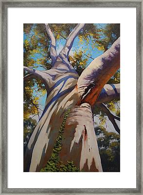 Eucalyptus Tree Portrait Framed Print