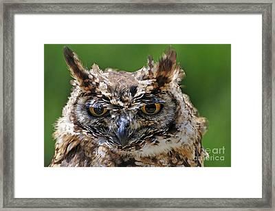 Eurasian Eagle-owl Framed Print by Sami Sarkis