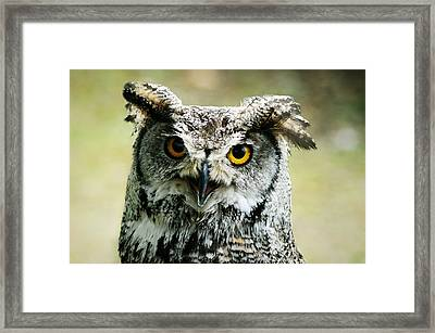 Eurasian Eagle Owl Framed Print by Weeping Willow Photography