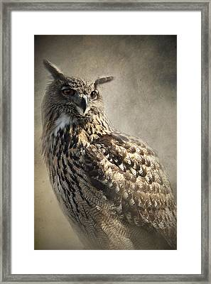 European Eagle Owl Framed Print