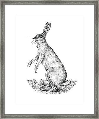 European Hare, Artwork Framed Print by Lizzie Harper