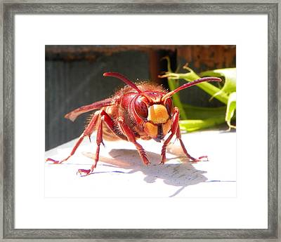 Framed Print featuring the photograph European Hornet by Chad and Stacey Hall
