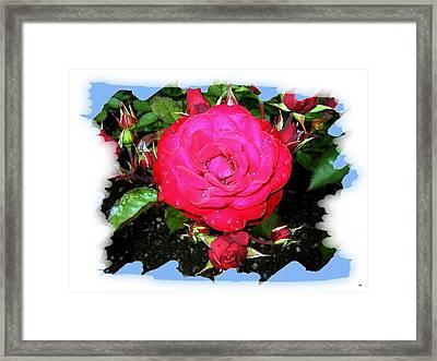 Europeana Roses And Raindrops Framed Print by Will Borden