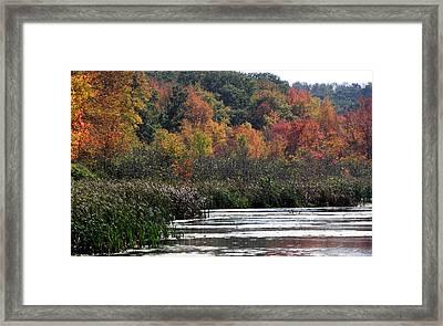 Even Swamps Have Beauty Framed Print by Kim Galluzzo Wozniak