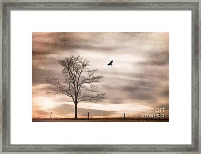 Evening Flight Framed Print by Darren Fisher