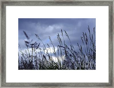 Evening Grass Framed Print by Elena Elisseeva