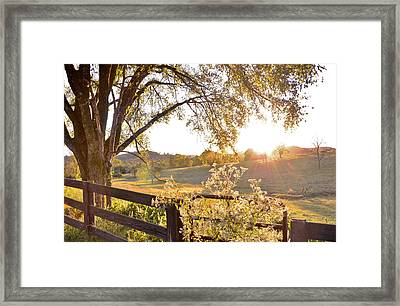 Evening Light Framed Print