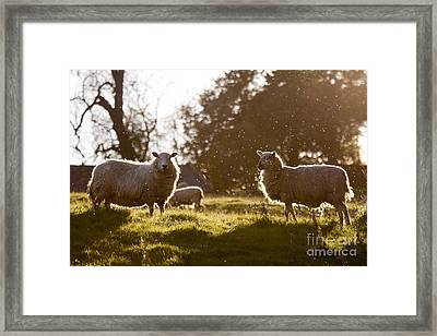 Evening On The Meadow Framed Print by Angel  Tarantella