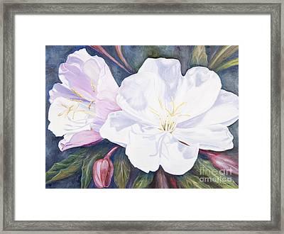 Evening Primrose Framed Print