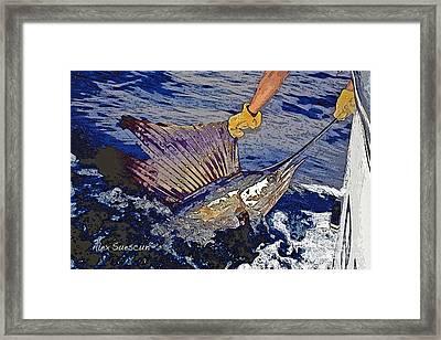 Evening Sail Framed Print