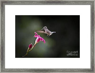 Evening Snack Framed Print