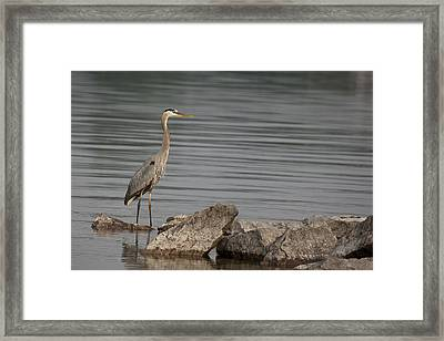 Framed Print featuring the photograph Ever Alert by Eunice Gibb