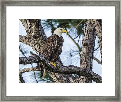 Ever Watchful Framed Print