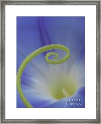 Everlasting Photography Framed Print