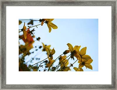 Every Sight And Every Sound Framed Print by Laurie Search
