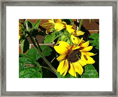 Framed Print featuring the photograph Everyone Loves Sunflowers by Jim Sauchyn