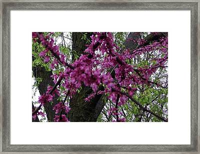 Everything Spring Framed Print by Elizabeth  Sullivan