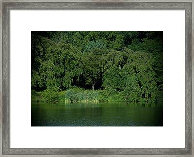 Everywhere And Nowhere - Holmdel Park Framed Print