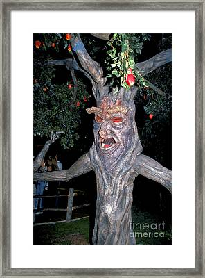 Evil Tree In Oz Framed Print by Carl Purcell