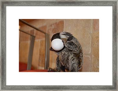 Evolution Of The Motorcycle Helment Chewy The Marmoset Framed Print by Barry R Jones Jr
