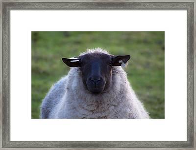 Ewe Tube Framed Print