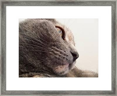 Excuse You Framed Print by Diana Lovett