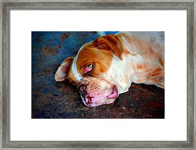 Exhausted Framed Print by Paulo Zerbato