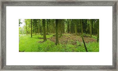 Exmoor Forest Framed Print by Jan W Faul