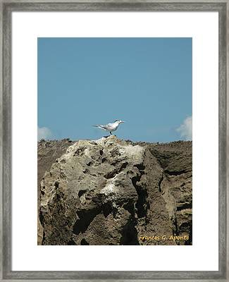 Exoctic Birds Framed Print by Frances G Aponte