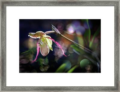 Framed Print featuring the photograph Exotic Alien  by Richard Piper