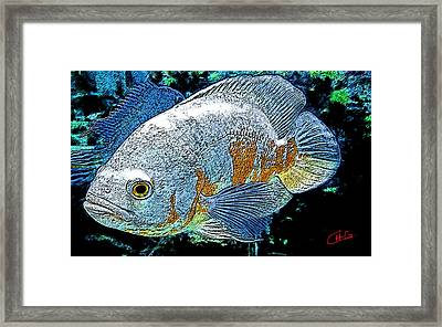 Exotic Fish  Framed Print