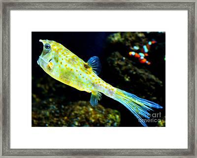 Exotic Fish Framed Print by Pravine Chester