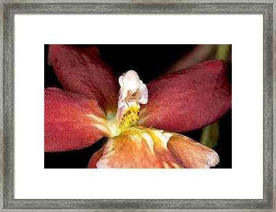 Framed Print featuring the photograph Exotic Orchid Bloom by C Ribet