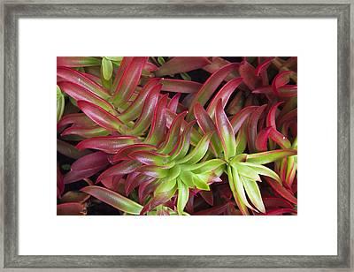Exotic Plant In The Peruvian Amazon Framed Print by Axel Fassio
