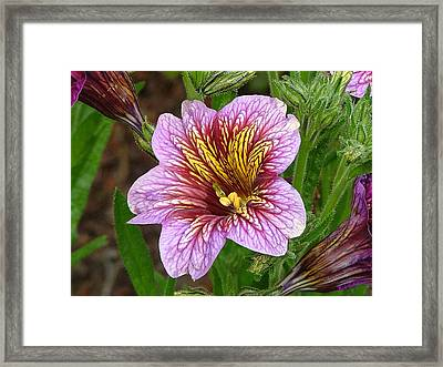 Framed Print featuring the photograph Exploding Beauty by Wendy McKennon