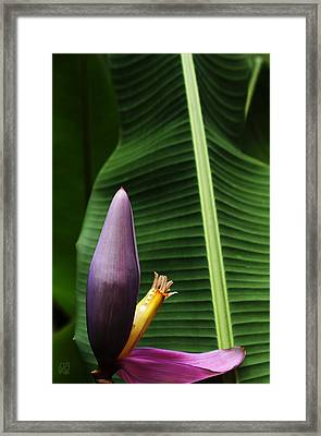 Exploring Light In Nature Framed Print
