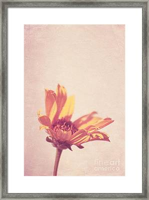Expression - S07ct01 Framed Print by Variance Collections