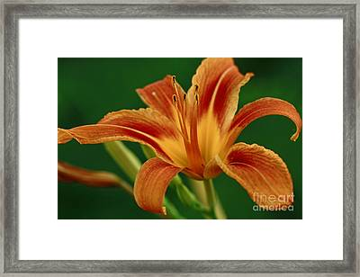 Expression Of Joy Framed Print by Inspired Nature Photography Fine Art Photography