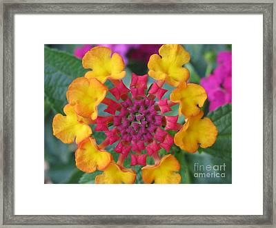 Extraordinary Photography Framed Print by Tina Marie