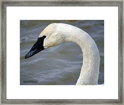 Framed Print featuring the photograph Extreme Close Up by Brian Stevens