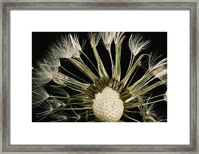 Extreme Close-up Of The Seedhead Framed Print