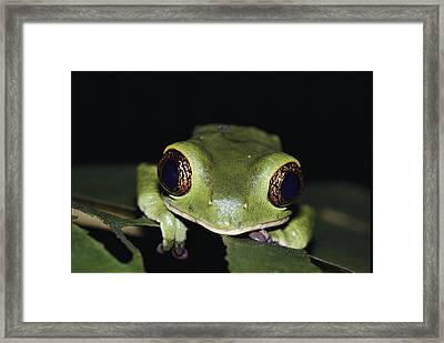 Extreme Head-on Close-up Of A Green Framed Print