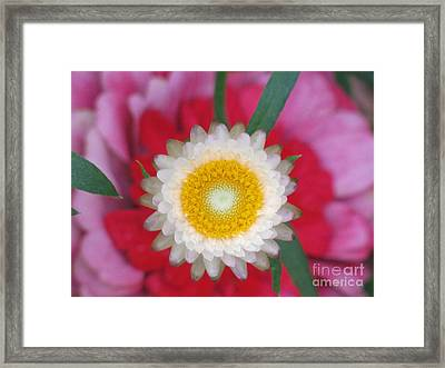Framed Print featuring the photograph Eye Candy Photography by Tina Marie