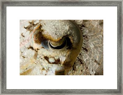 Eye Detail Of A Cuttlefish Sepia Framed Print